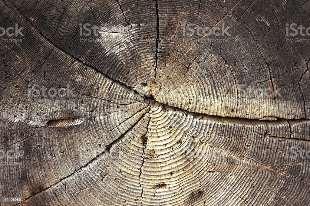 Old Growth Cross-Section Center royalty-free stock photo