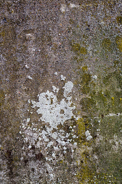 old grunge rendered wall with moss for backgrounds stock photo