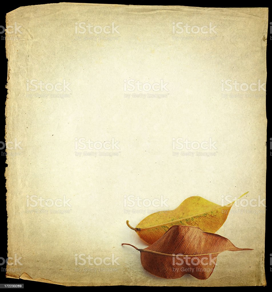old grungy piece of paper and leaves royalty-free stock photo