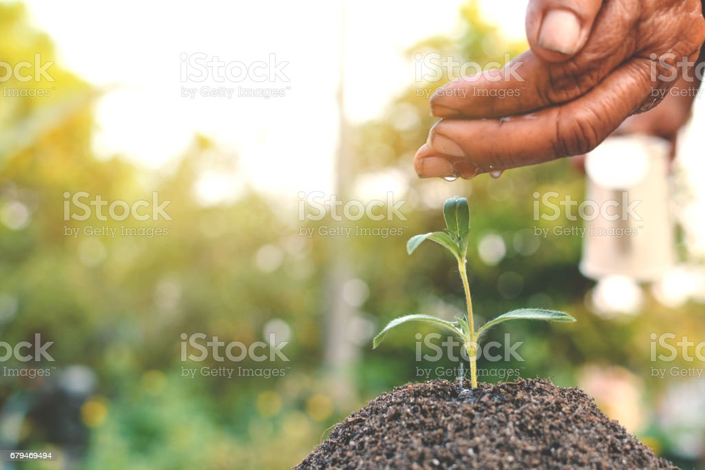 Old hand watering a tree on soil royalty-free stock photo