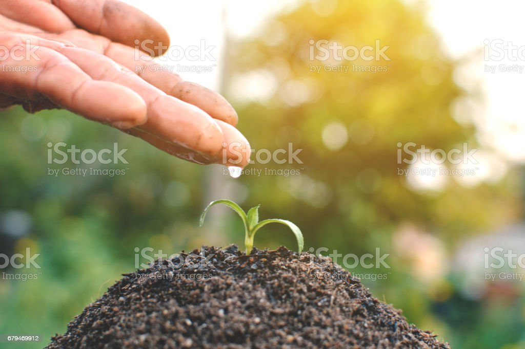 Old hand watering a tree on soil 免版稅 stock photo