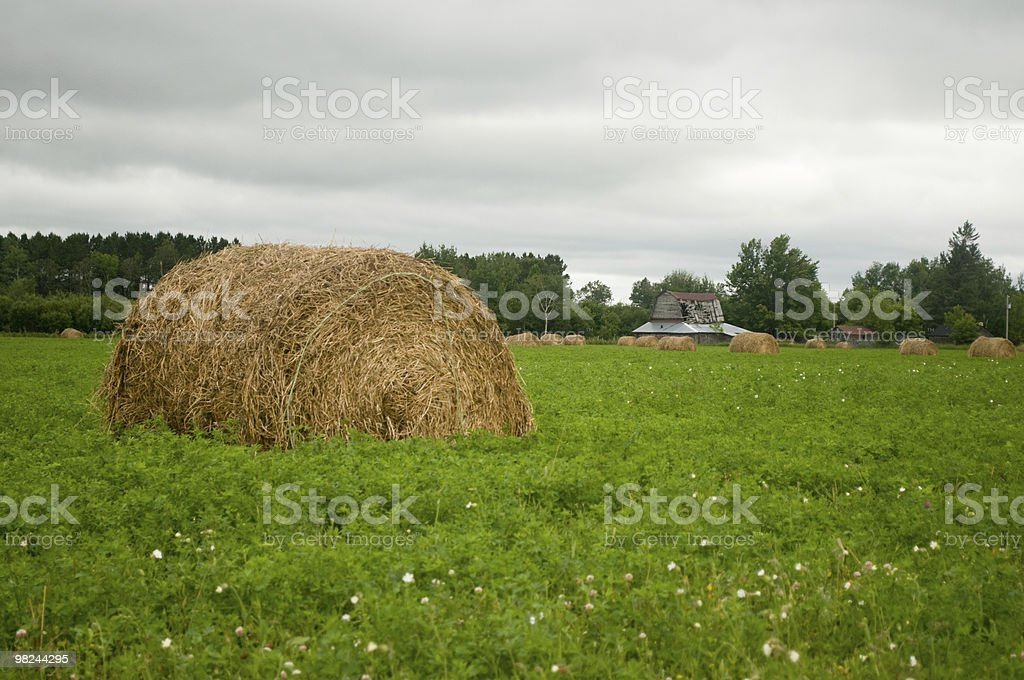 old hay bale royalty-free stock photo