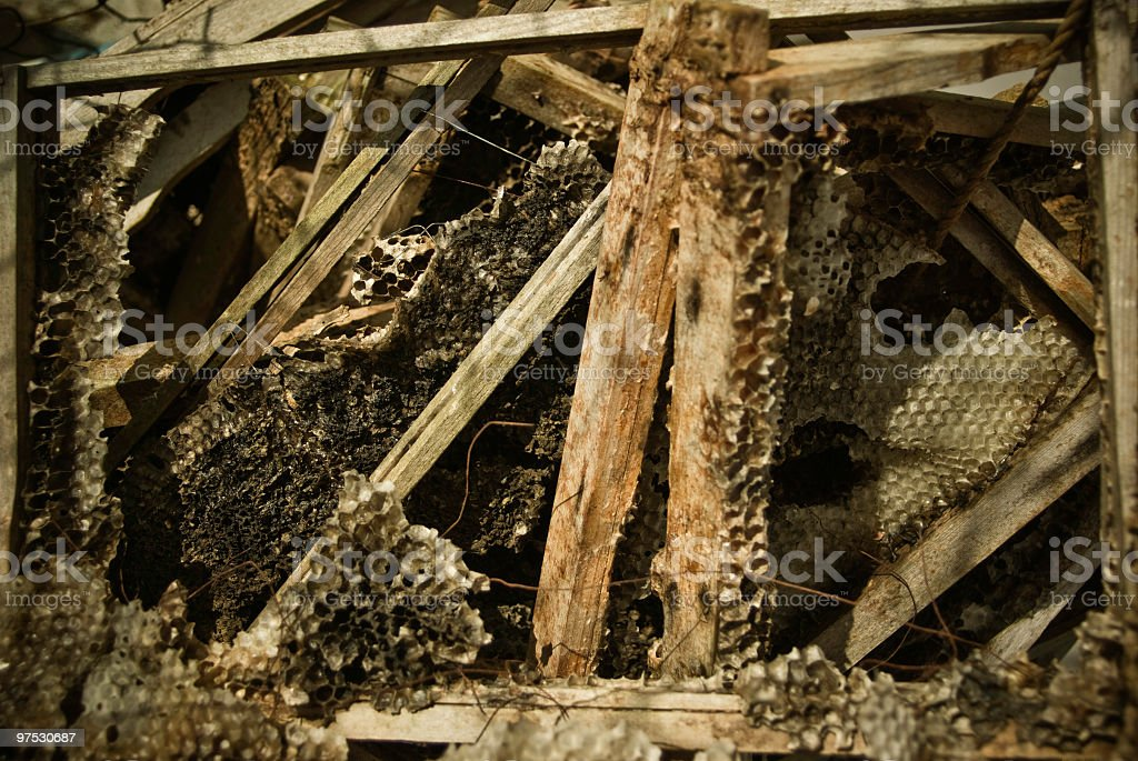 Old honeycomb from beehive royalty-free stock photo