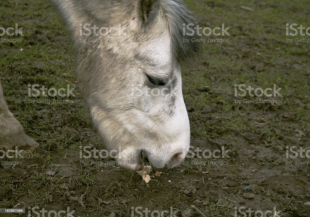 old horse stock photo