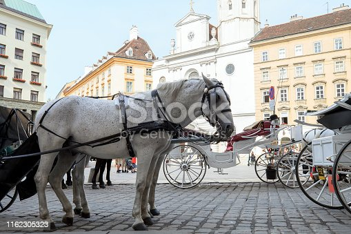 Pair of white horses in harness, vintage style. Old horse-drawn carriage riding on city street in Vienna, Austria