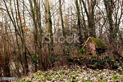 an old duck house on a secluded lake