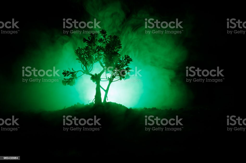 Old house with a Ghost in the forest at night or Abandoned Haunted Horror House in fog. Old mystic building in dead tree forest. Trees at night with moon. Surreal lights - Zbiór zdjęć royalty-free (Abstrakcja)
