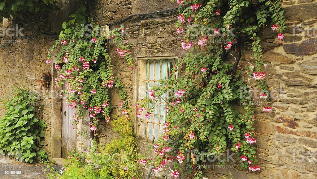 Old house with columbine flowers royalty-free stock photo