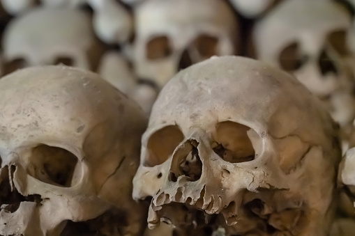 old human skull lies in a row close-up open cemetery