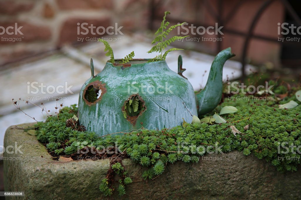 Old kettle instead of a flower pot stock photo