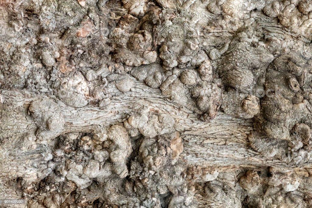 Vieille noueux arbres texture d'arrière-plan bois - Photo