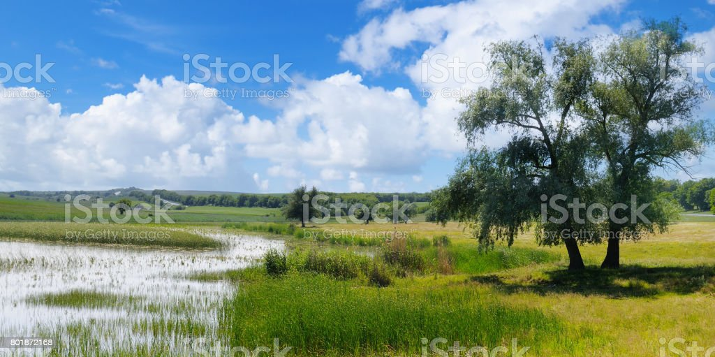 old lake with aquatic vegetation and picturesque meadows. stock photo