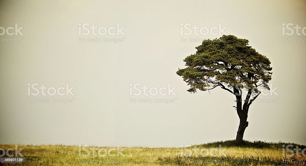 Old Landscape Tree on dry grass royalty-free stock photo