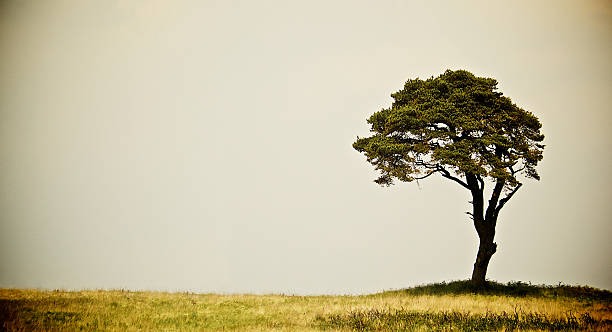 Old Landscape Tree on dry grass stock photo