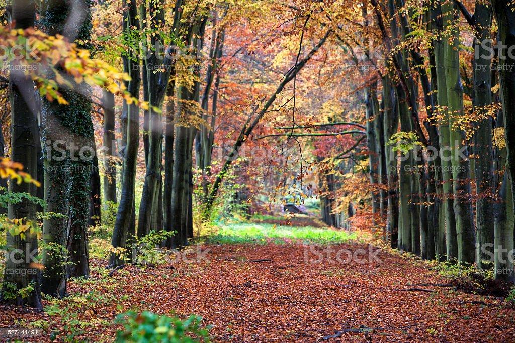 Old lane dans les bois - Photo