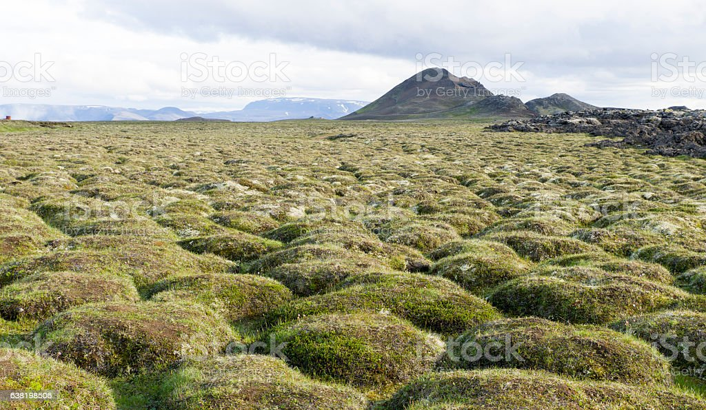 Old lava field, Iceland stock photo