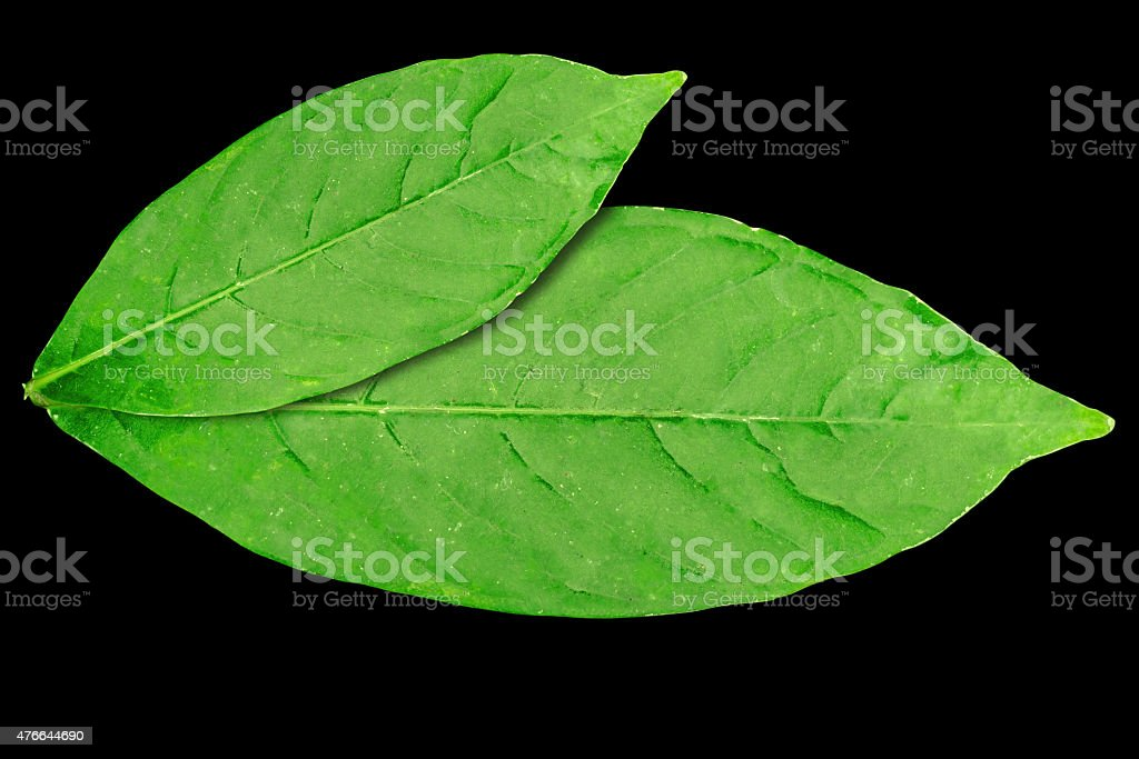 Old leaf stock photo