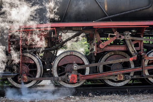 Historical steam train passes through the deciduous forest.
