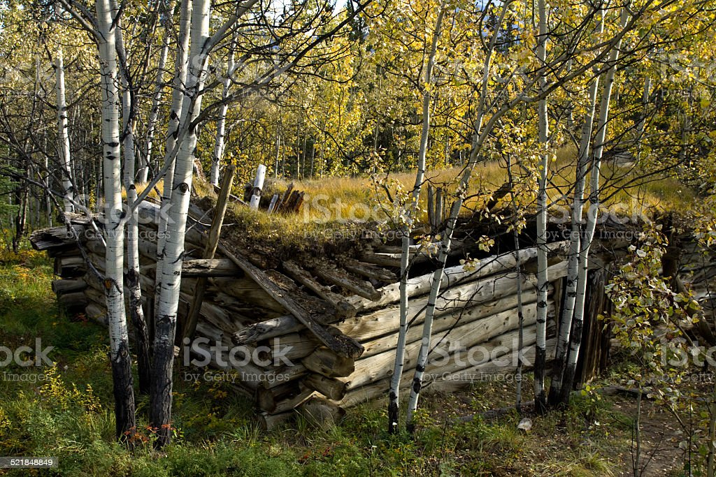 Old log cabin and golden aspens in the fall stock photo
