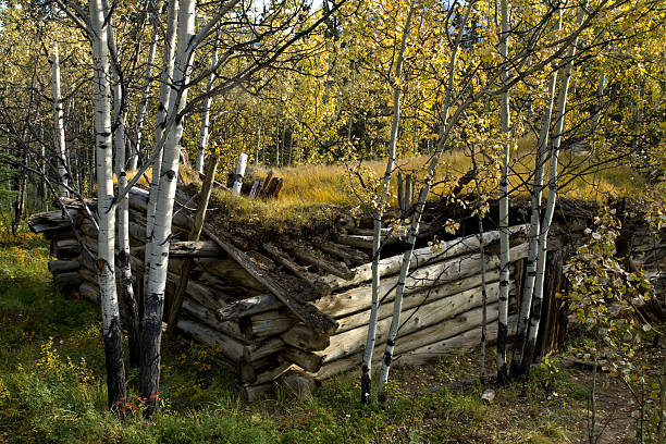 old log cabin and golden aspens in the fall - yt stock pictures, royalty-free photos & images