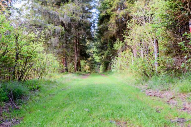 alten Protokollierung trail – Foto