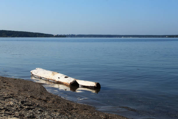 Old logs in water near shore of lake. stock photo