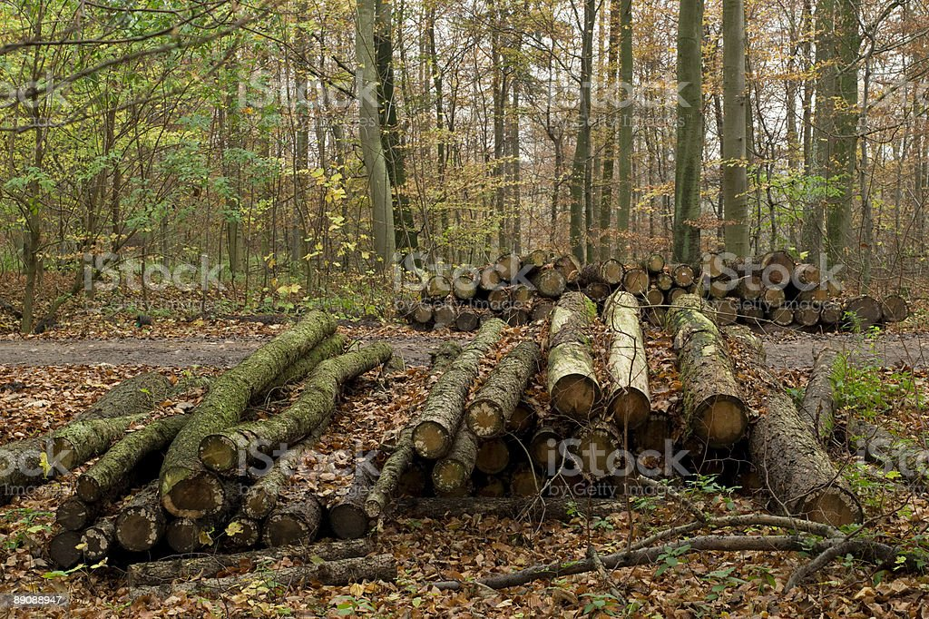 Old Logs. royalty-free stock photo