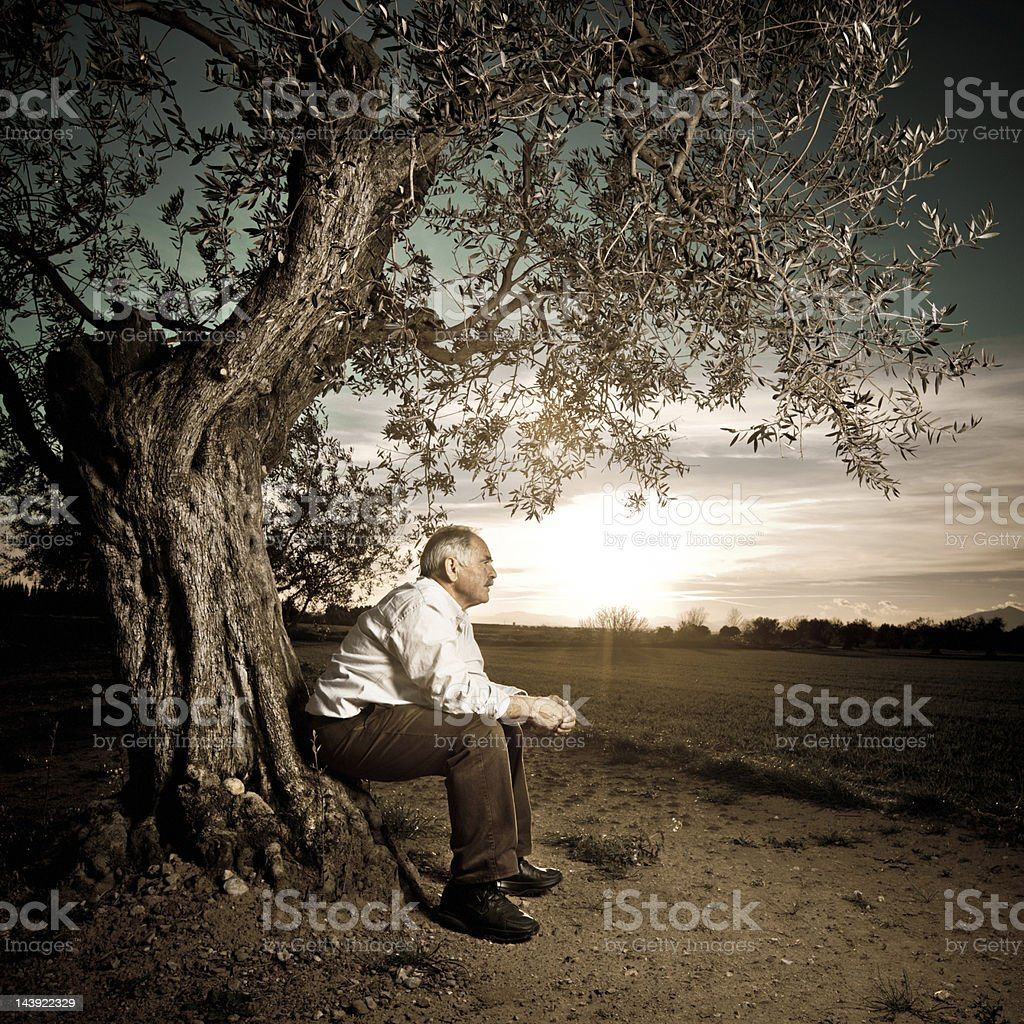 Old man ancient tree royalty-free stock photo