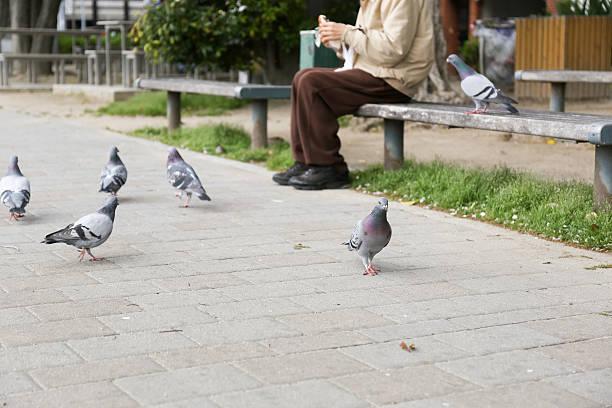 Old man feeding birds in a park picture id173390162?b=1&k=6&m=173390162&s=612x612&w=0&h=bg4lkup7075d8026wvogshpuosbjqefckwuae tqceg=