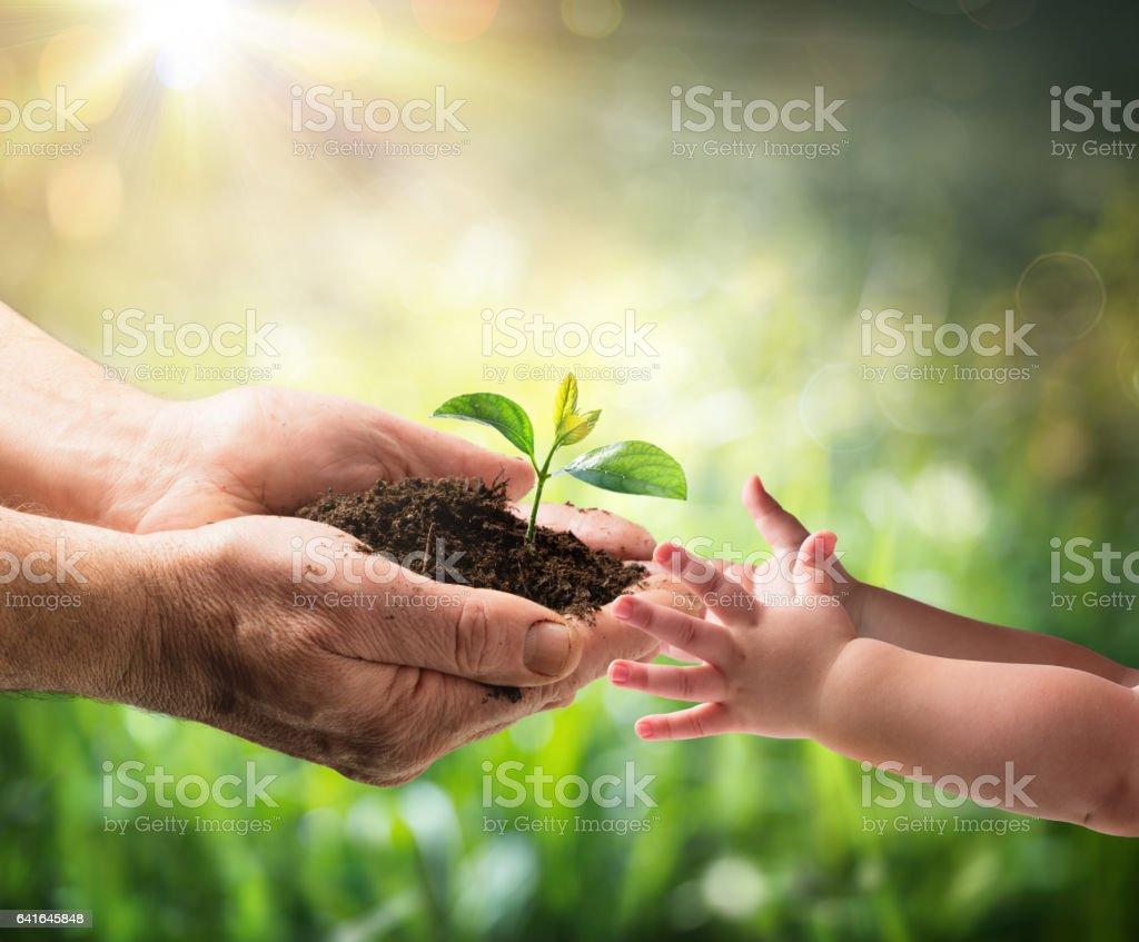 Vieil homme donnant jeune Plant à un enfant - Photo