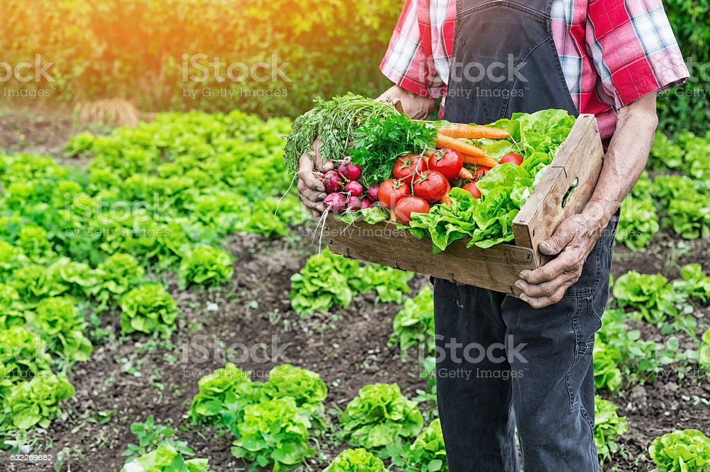 Old man holding a grate full of raw vegetables stock photo