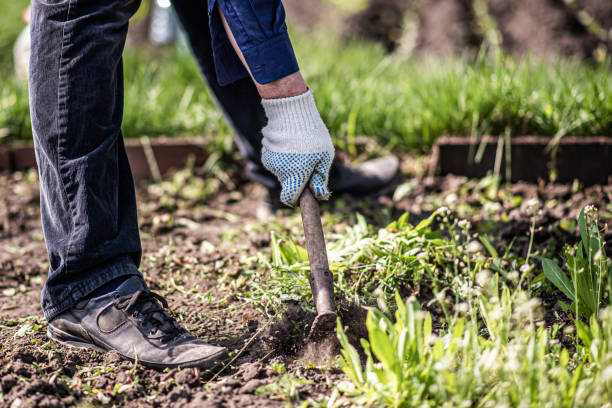 old man uproots hoe weeds in his garden an old man works on the ground and removes a weed from his garden garden hoe stock pictures, royalty-free photos & images