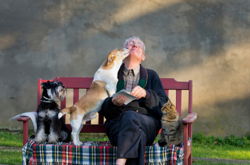 istock Old man with pets 453936041