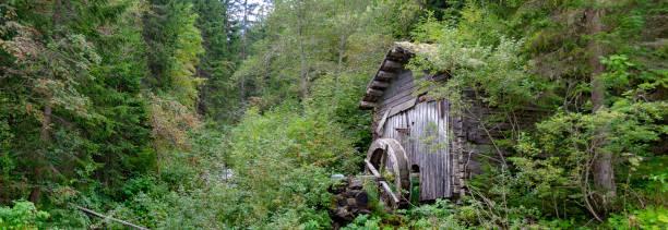 alte mühle in dichten wald - baumgruppe stock-fotos und bilder