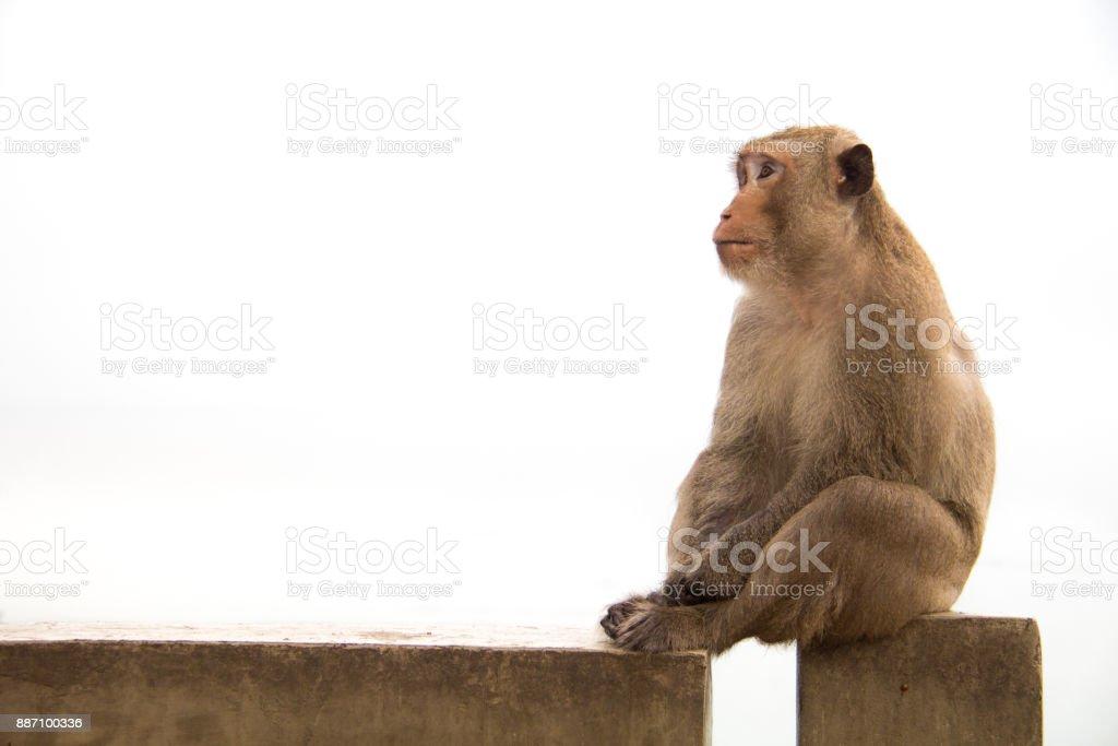 Old monkey sitting on cement concrete feeling something is waiting. stock photo
