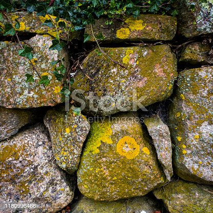 Natural stacked stone wall covered in yellow and green moss, close up photo