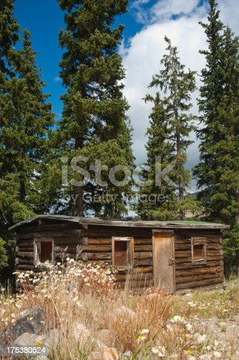 A long ago abandoned cabin in the mountains stands vacant, with only fir trees and blooming camomile close by.