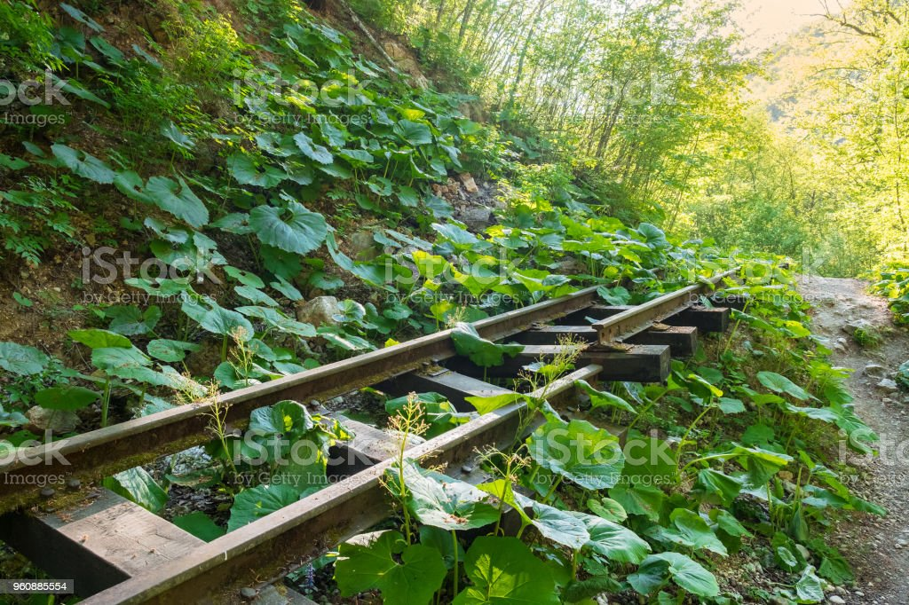 alten Schmalspurbahn in den Wald im Sommer überwuchert mit Pflanzen und Rasen - Lizenzfrei Adygeja Stock-Foto