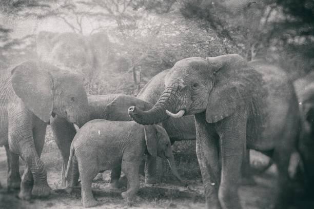 alte nostalgische foto von kenia - die wilden 20er stock-fotos und bilder