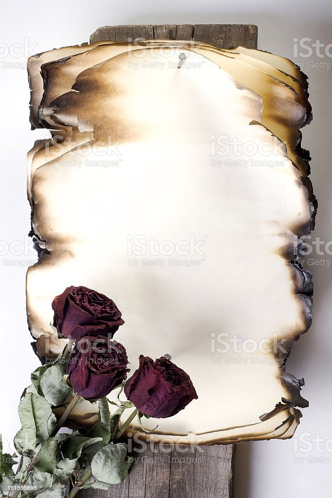 Old note and three roses isolated royalty-free stock photo