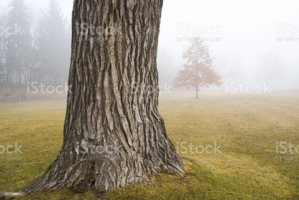 Old Oak Tree Trunk in Autumn Fog at Park royalty-free stock photo