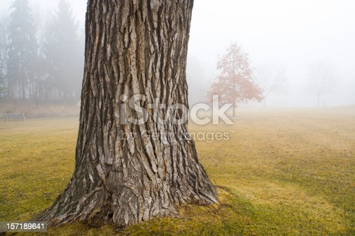 A misty morning fog in the park, Minneapolis, Minnesota, USA. An old tree trunk in focus in the foreground with young trees and forest in the cloudy fog in the background. A moody, quiet, soft outdoors overcast landscape with no people and copy space.