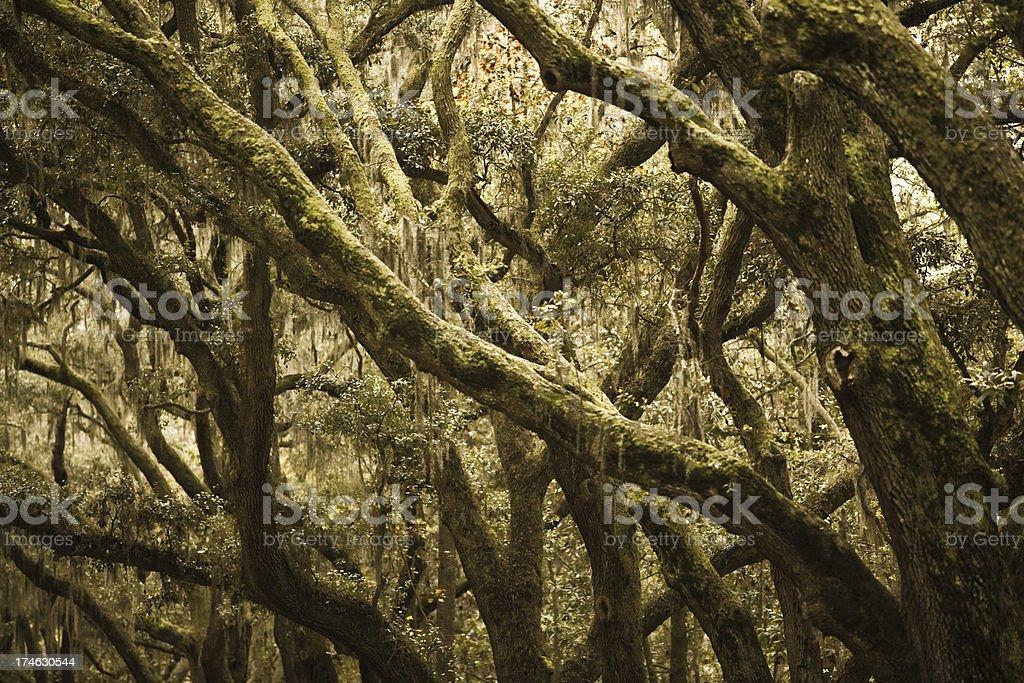 Old oak trees in Savannah Georgia royalty-free stock photo