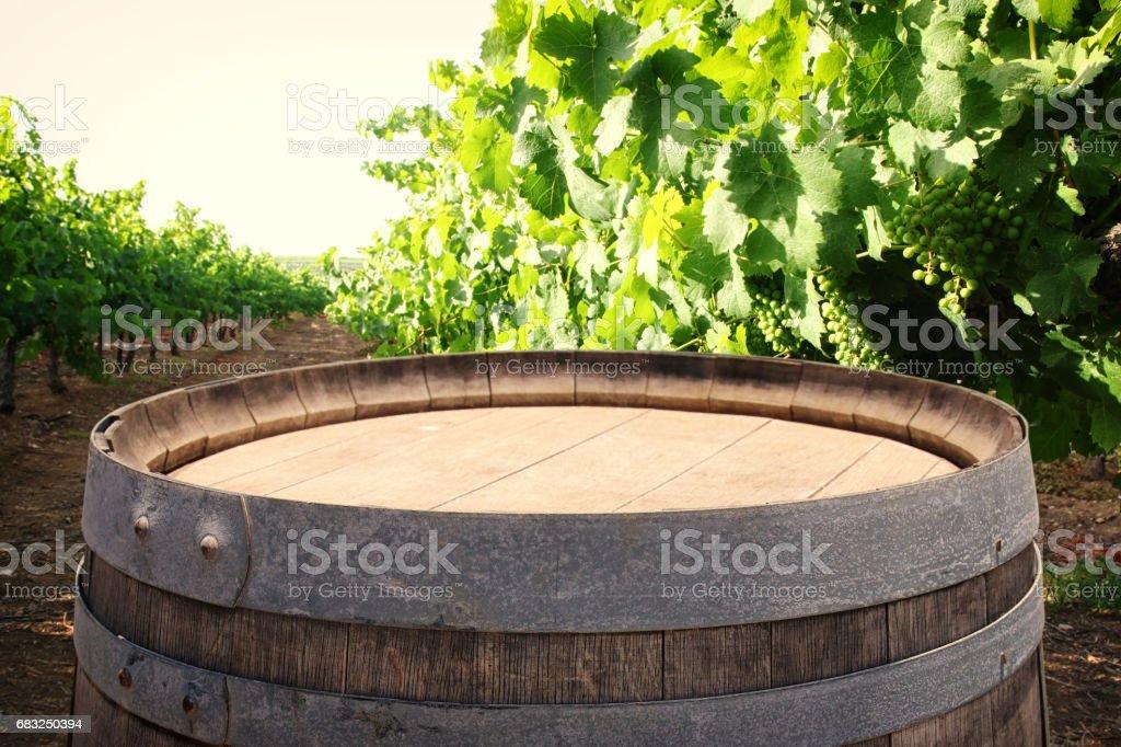 在葡萄酒的院子景觀老橡木酒桶 免版稅 stock photo