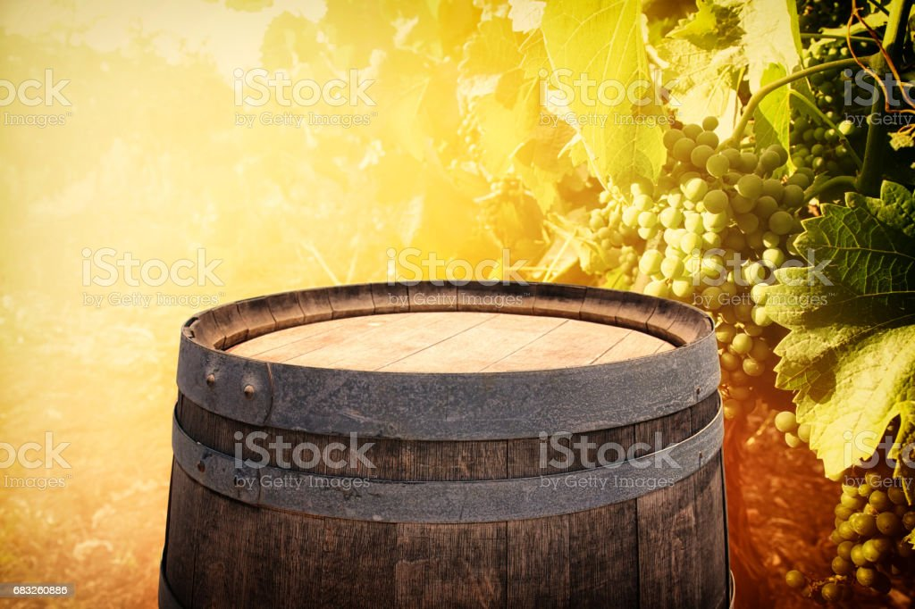 old oak wine barrel in front of wine yard landscape foto de stock royalty-free