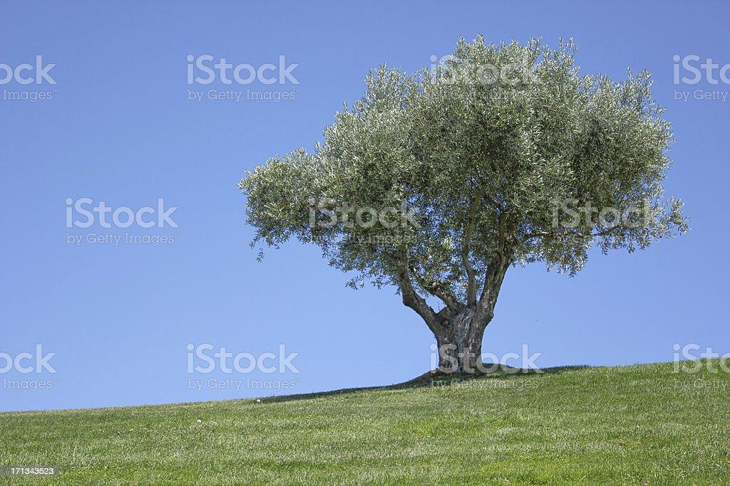 Vecchio verde oliva - foto stock