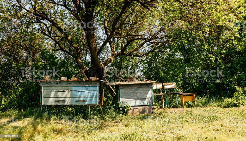 Old overgrown spring garden and old rustic garden furniture royalty-free stock photo