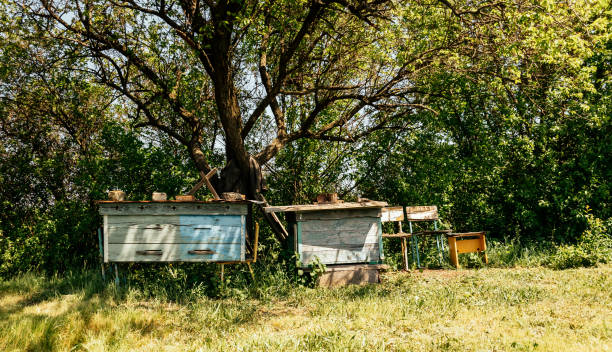 Old overgrown spring garden and old rustic garden furniture stock photo