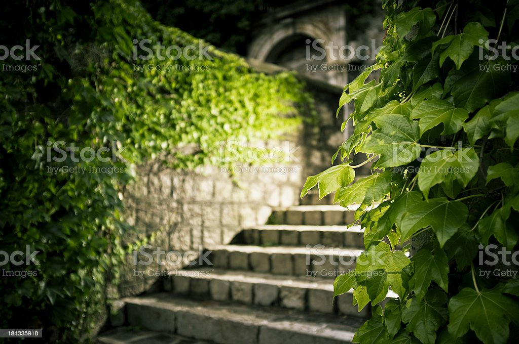 Old overgrown stone stairs stock photo