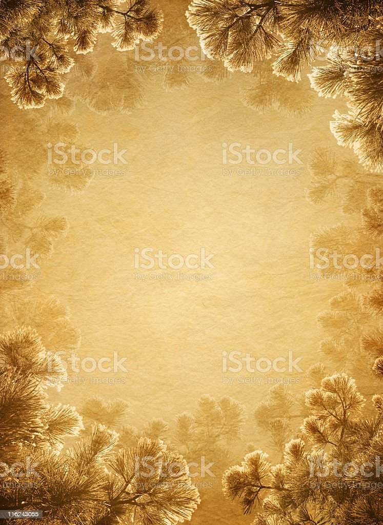 old paper with pine branches royalty-free stock photo